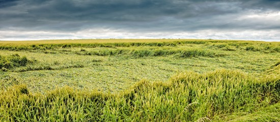 Assurance récolte des agriculteurs: pas de baisse du seuil de déclenchement!