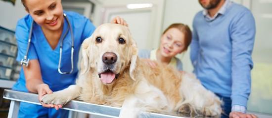 Vétérinaires: des aides pour les praticiens en zones fragiles